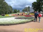 Flower Exhibition in Canberra