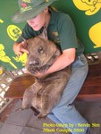 This is not pig, that's a wombat