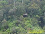 Treetop Accomodation in KK, Sabah